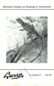 Lacerta28-06