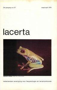 Lacerta340607
