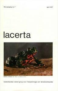 Lacerta3507