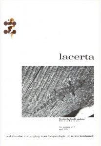 Lacerta3607