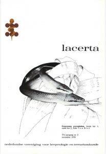 Lacerta3702
