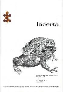 Lacerta3706