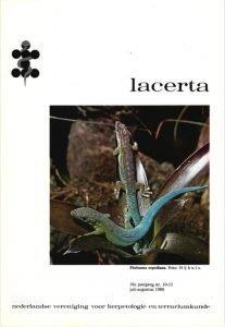 Lacerta3810-11