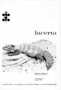 Lacerta3901