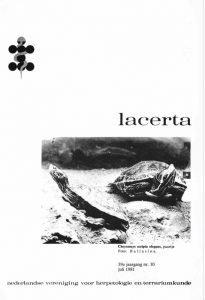 Lacerta39010