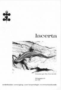 Lacerta3908