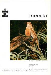 Lacerta3909