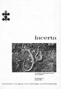 Lacerta4105