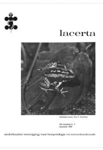 Lacerta4203