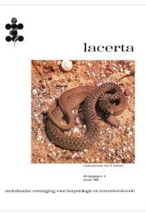 Lacerta4204