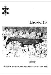 Lacerta4205