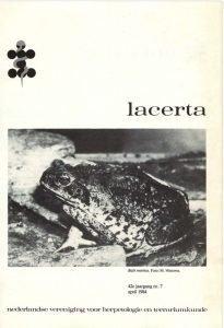 Lacerta4207
