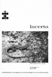 Lacerta44-04