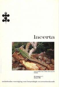 Lacerta44-05
