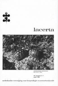 Lacerta44-06