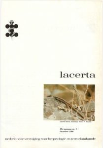 lacerta4503